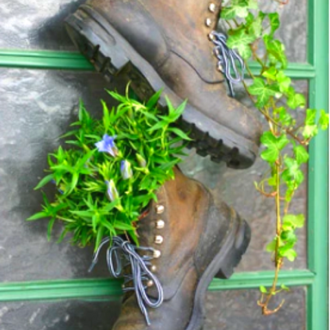 Old mens boots filled with plants