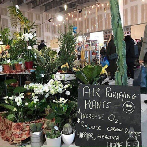 Indoor plant market