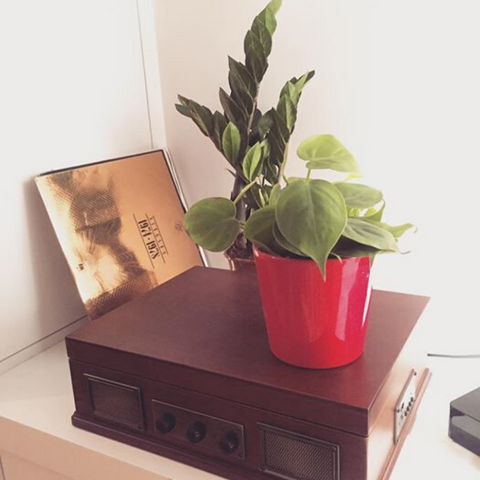 plant in red pot on top of vintage record player