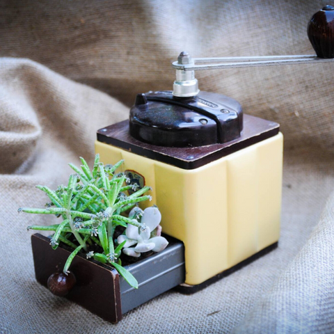 Succulents in vintage coffee grinder