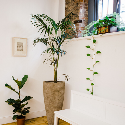 Office plant installations