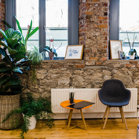 large indoor plants Etsy Dublin office