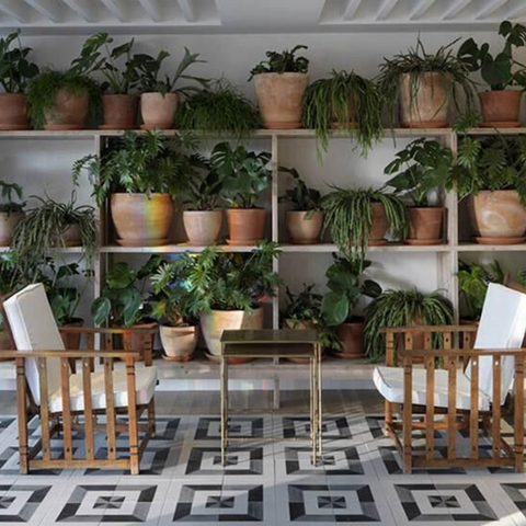 Room with shelves filled with potted plants