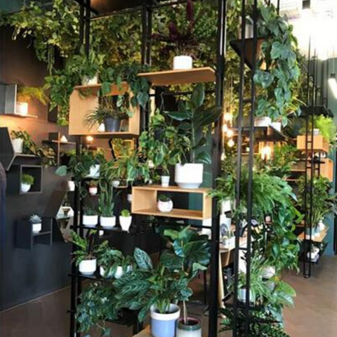 selection of hanging and potted plants on shelves in shop