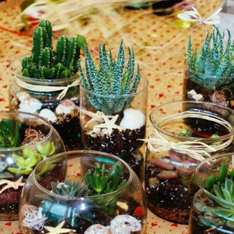 Selection of glass terrariums filled with mini succulents