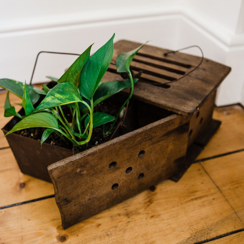 Small plant in vintage wooden box
