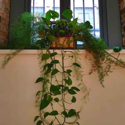 Large hanging plant in wooden box