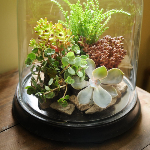 Selection of small succulents in glass dome terrarium