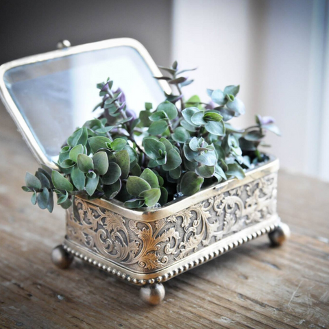 Selection of succulents in vintage jewellery box