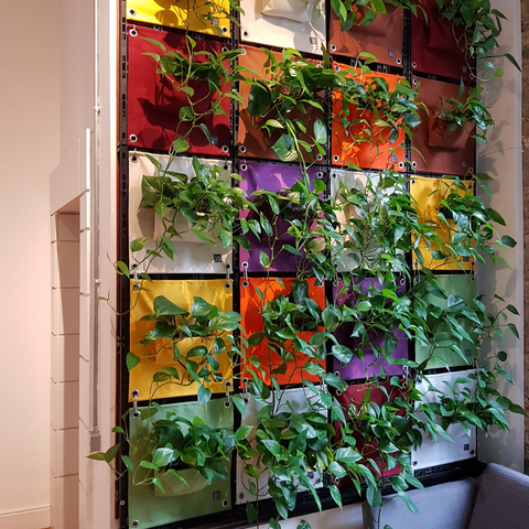 Multi-coloured verti grows at Etsy Dublin office