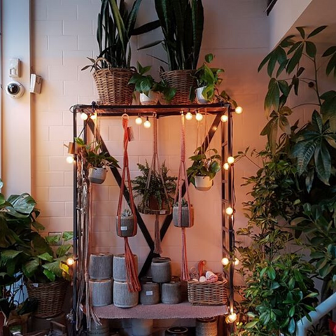Hanging plants in macrame holders Brother Hubbard Dublin