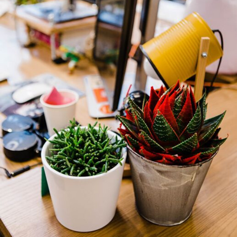 Small colourful plants on office desk
