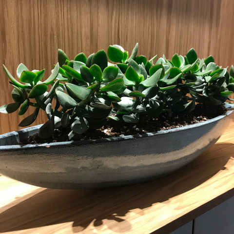 Succulents in long boat-shaped pot