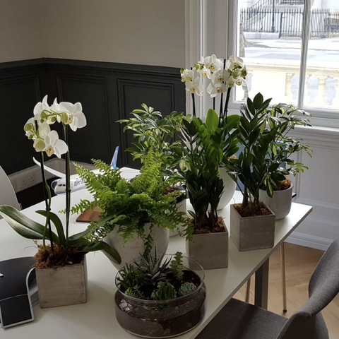 Selection of office friendly indoor plants on desk