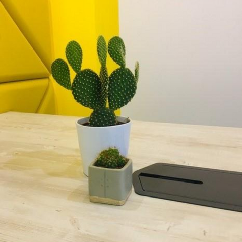 Small office desk plants ireland
