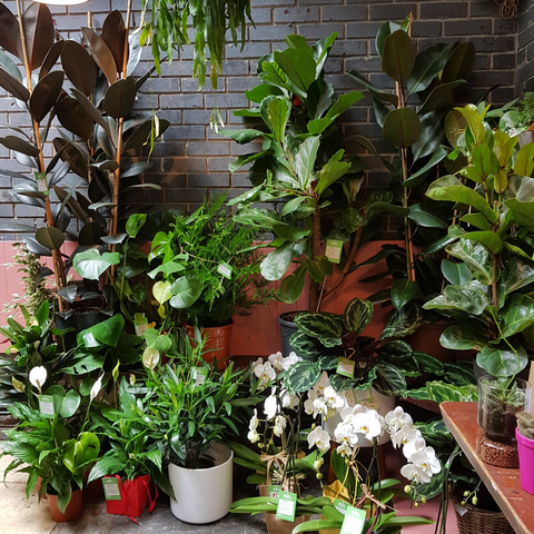 Selection of large and small potted plants Ireland
