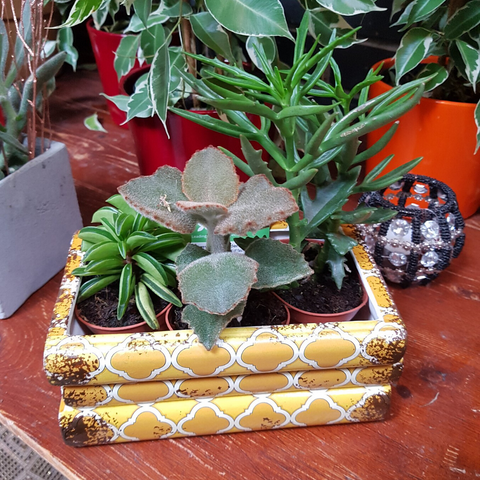 Succulents in quirky plant pot