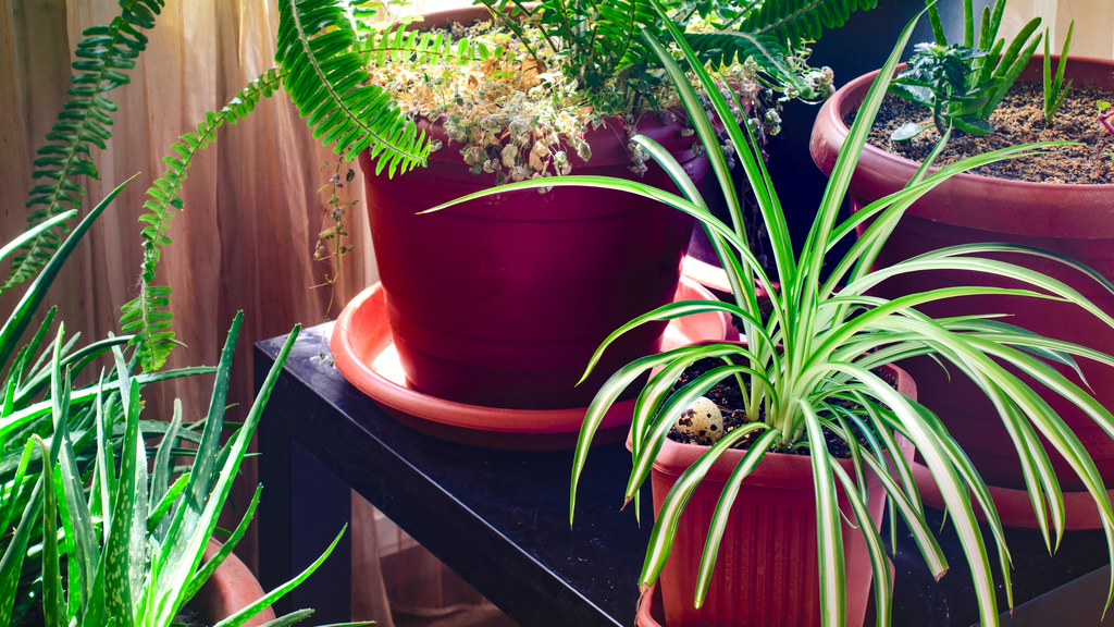An image of a group of potted indoor plants provided by Plant Store Ireland