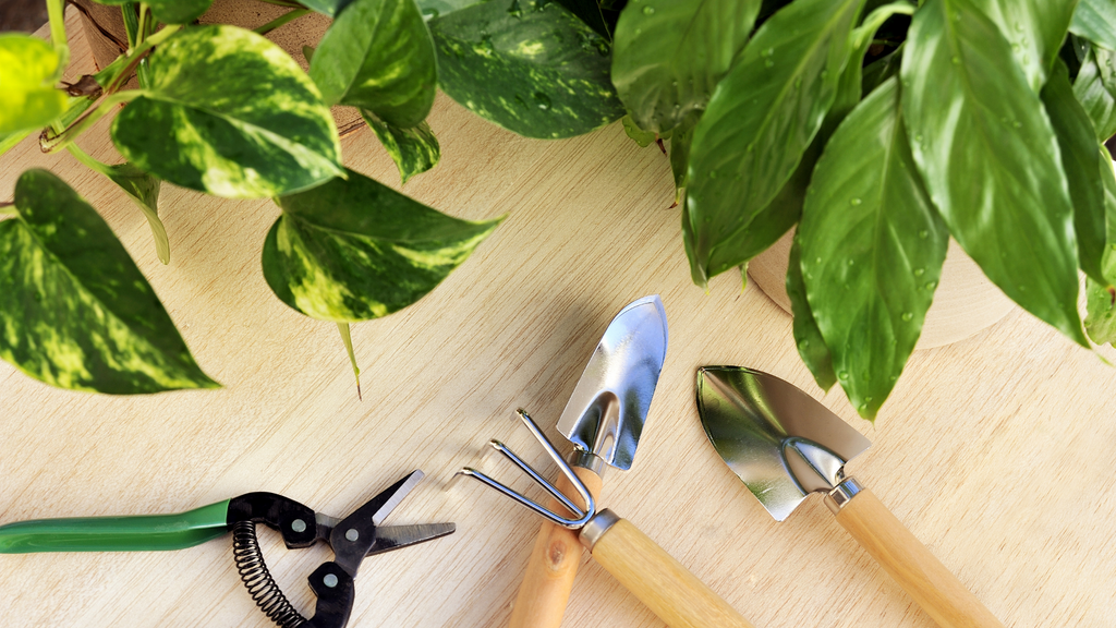 An image of indoor plant pruning tools
