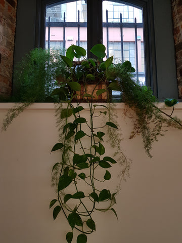 Up-cycling plants