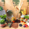 Create Your Own Terrarium Kit (Large) Glass Container 24cm in Diameter - 1 x Large Succulent 3 x Small Succulent