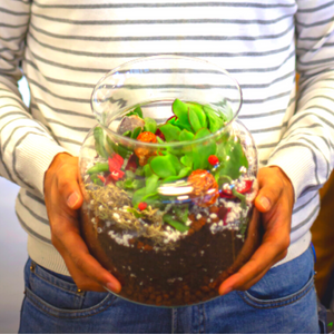 Create Your Own Terrarium Kit (Small) Glass Container 18cm in Diameter - 1 x Large Succulent 2 x Small Succulent
