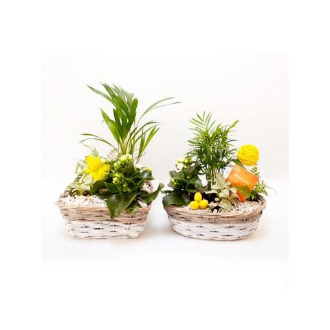 Plant Gift Baskets - Plant Store