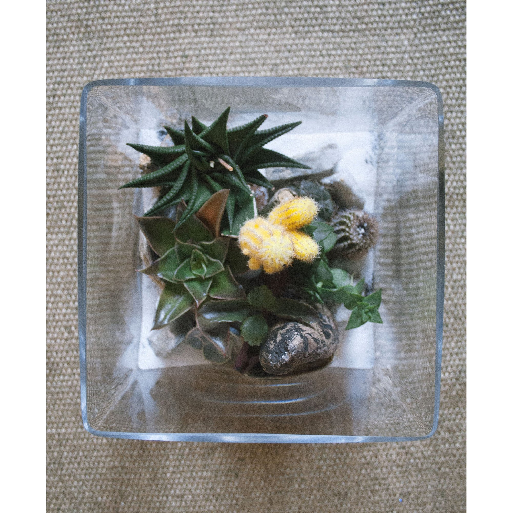 Glass Square Terrarium