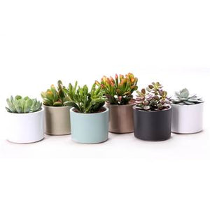 Succulents in Clay Cylinder Pots