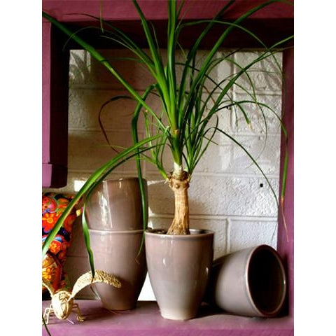 Tall Grey Ceramic 12cm - Plant Store