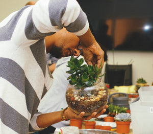 How to Make and Plant A Glass Terrarium