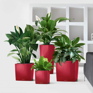 Lechuza Cube Plant Containers