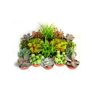 Succulent Tray - Plant Store