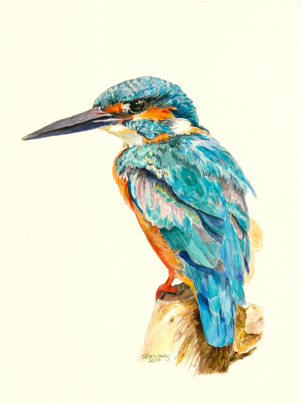 Kingfisher Notecards, pack of 3,