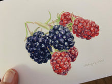 "Load image into Gallery viewer, Blackberries ""Little Gems"" Notecards - pack of 3"