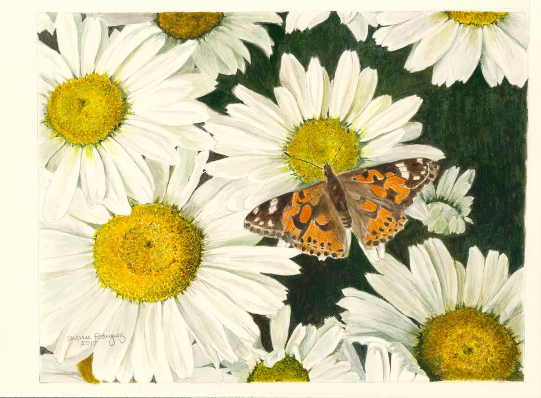 Daisies and Butterfly Notecards,