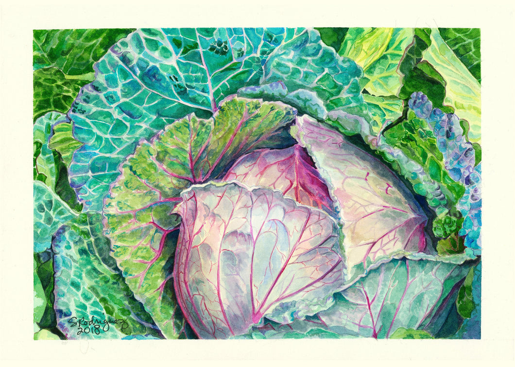 Cabbage Notecards,