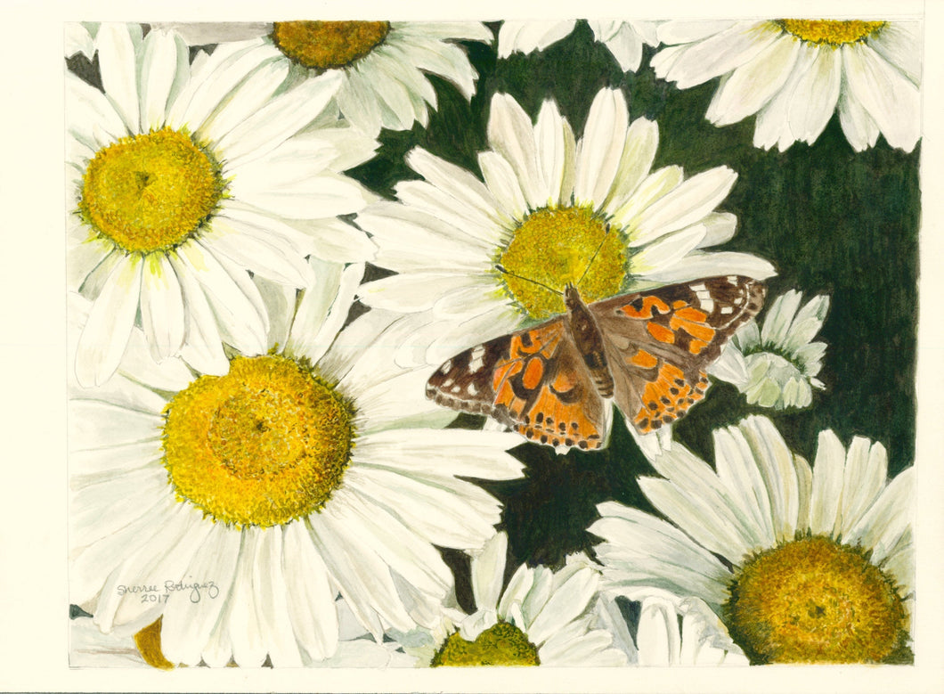 Daisies and Butterfly Print,