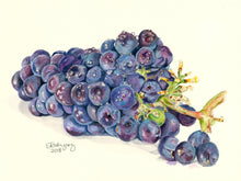 "Load image into Gallery viewer, Grapes Print, ""Crisp and Sweet"""