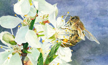 "Load image into Gallery viewer, Honeybee on White Cherry Blossom Print, ""Buzz Worthy"""