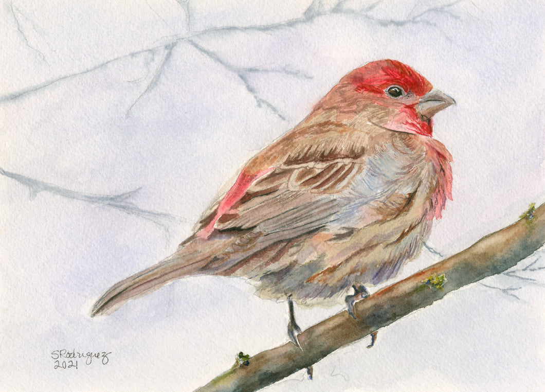Red House Finch Print