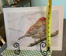 Load image into Gallery viewer, Red House Finch Print
