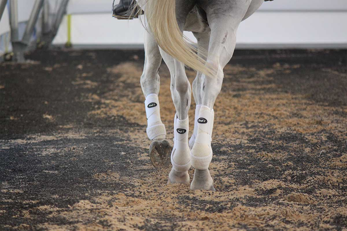Arena Footing Gallery - Photo 1