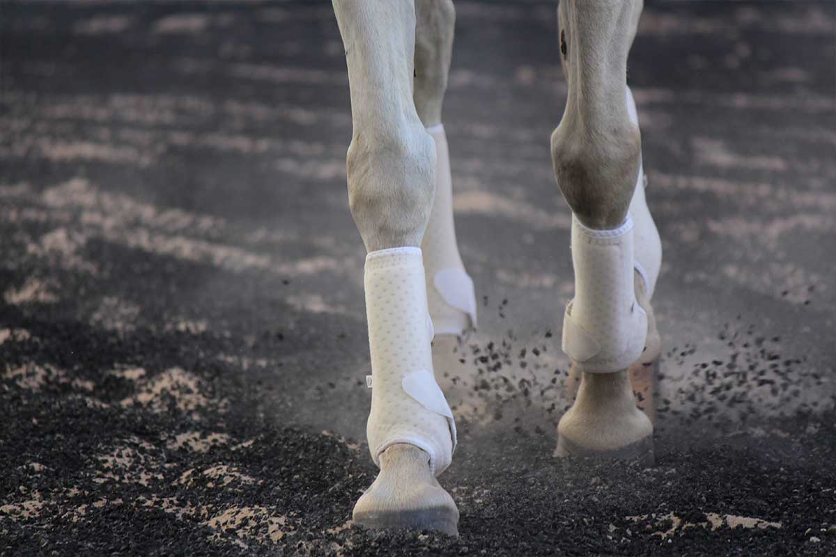 Arena Footing Gallery - Photo 2