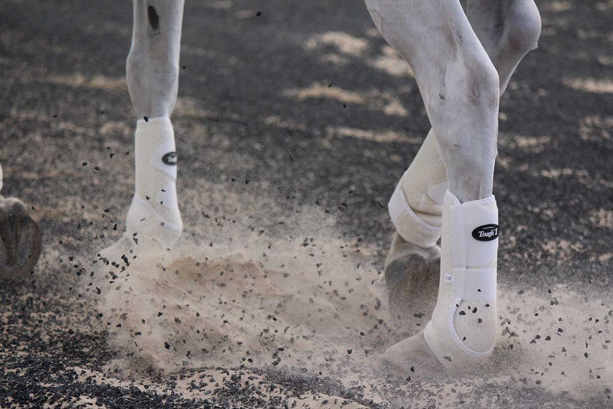 Arena Footing Gallery - Photo 3