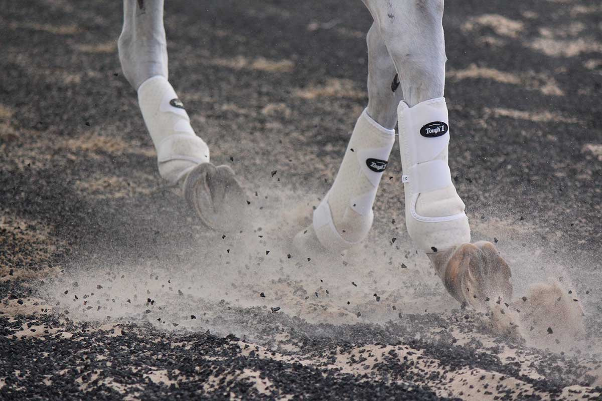 Arena Footing Gallery - Photo 4