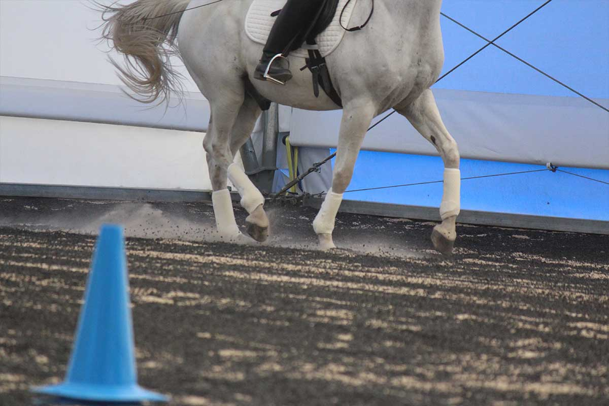 Arena Footing Gallery - Photo 5