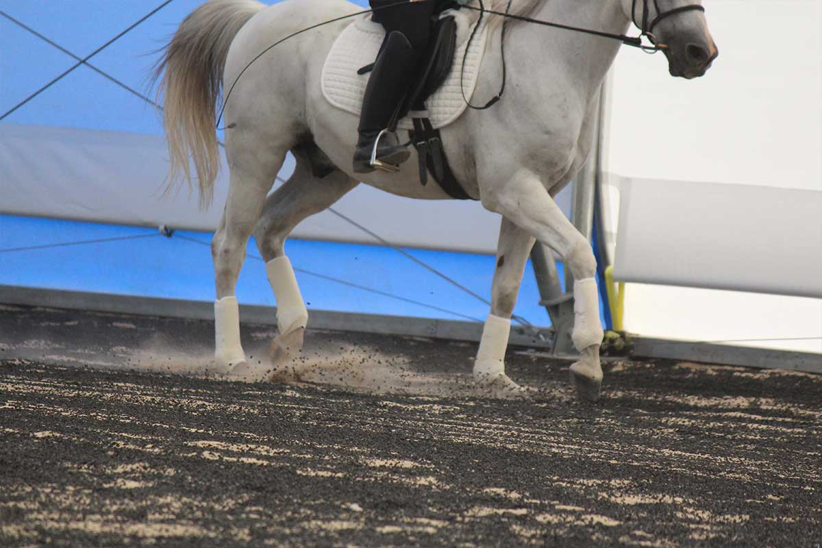 Arena Footing Gallery - Photo 6