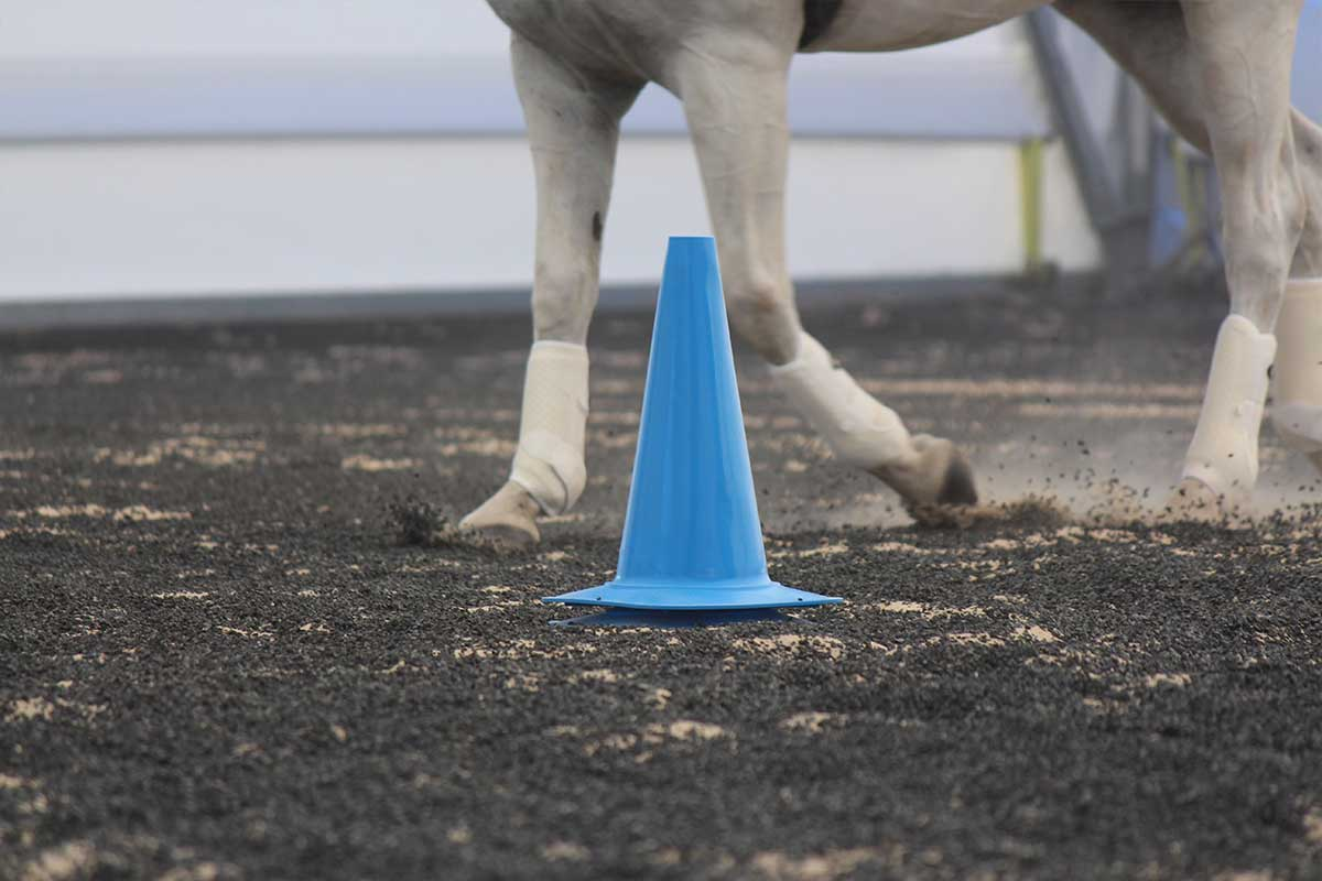 Arena Footing Gallery - Photo 7