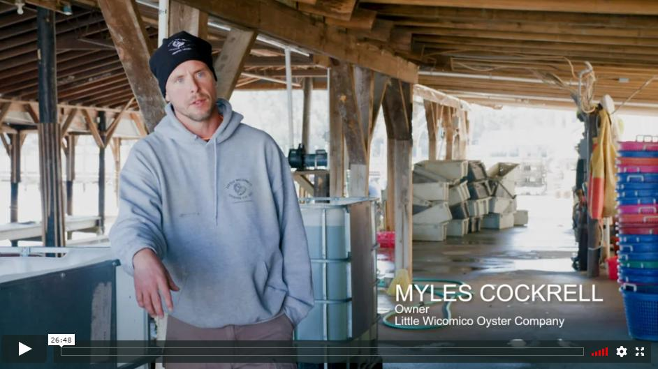 Little Wicomico Oysters on Made in Virginia
